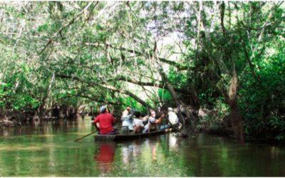 Aguajales & Renacales del río Avisado – Tingana