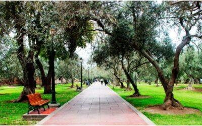 Bosque El Olivar