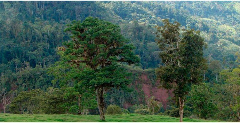 bosque-tshollet