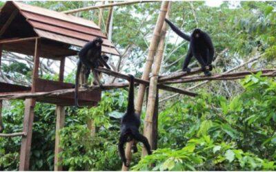 El encanto del zoológico de Quistococha
