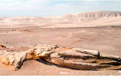 Fósiles de Ocucaje