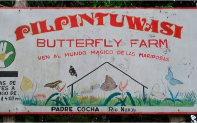 Granja de Mariposas Pilpintuwasi