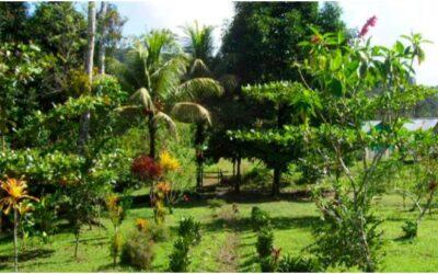 Jardín Botánico el Perezoso
