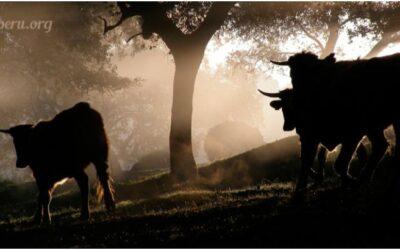 Leyenda de los tres Toros