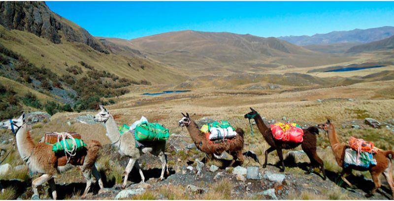 Llama Trek Olleros - Chavín