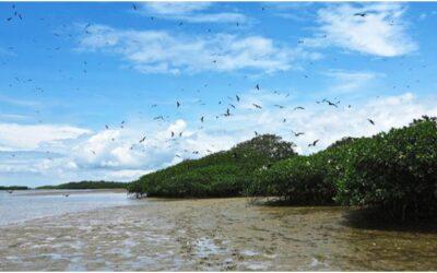 Manglares de Puerto Pizarro