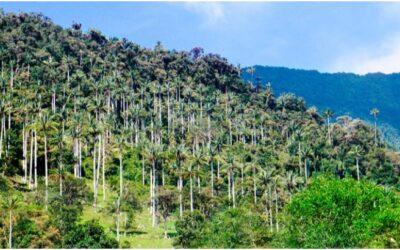 Parque Nacional Cutervo