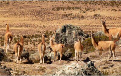 Reserva Nacional de Calipuy