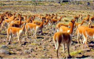 Reserva Nacional Pampa Galeras