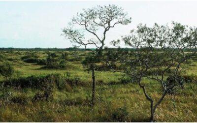 Santuario Nacional Pampas de Heath