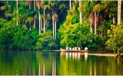 ¿Buscas naturaleza? La Selva del Perú te espera!