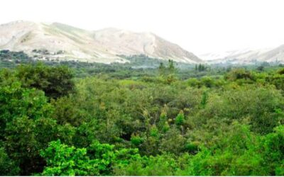 Valle de Omate