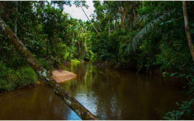 Zona Reservada Yaguas